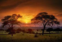 SAFARI EN TANZANIE  ET ÎLE DE ZANZIBAR / Windward Islands Travel vous propose cet exceptionnel circuit sur mesure sur les pistes de Tanzanie. Partez à la découverte de paysages merveilleux et d'espèces animales sauvages d'exception au travers de nombreux Parcs Nationaux et Safari en Tanzanie en pleine nature. Vous découvrirez ces terres préservées à bord d'un 4*4 et serez accompagnés d'un guide chauffeur francophone expert de la Tanzanie.