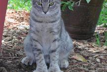 6 paw kittens