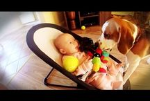 bébé /chien