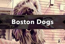 Boston Dogs / over 122 illustrations of the dogs of Boston...how and where they play.