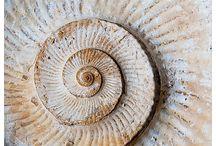 Fósiles: marinos y terrestres.