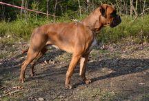 Pes, pejskové a pesani / Čtyřnožci všeho druhu