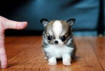 Cute and sweet!! <3