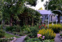 Our garden summer 2016 - Puutarhamme kesä 2016 / Pictures from our gardening summer 2016