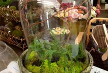 Spring Classes @ Aldena Frye / Terrariums and Succulents