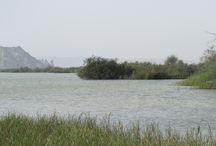 negure lagoon