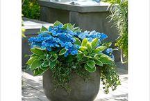 Växter + trädgårdspynt