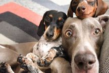 Funy dogs