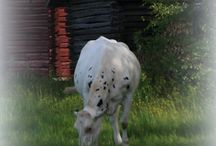 My hobby / pictures from nature around , animals , landscapes etc