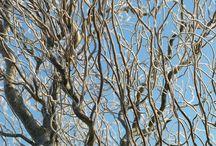 Tuinnieuws 2014  / Elke maand hebben wij de nieuwste tuintips en tuinweetjes voor u klaar liggen. In deze map u een overzicht van alle tuintips en tuinweetjes van elke maand. Voor meer informatie verwijzen we u naar http://www.warentuin.nl/tuinnieuws