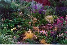 Bog Garden  / by Backyard Gardener