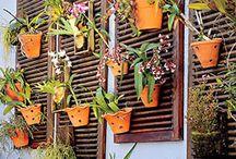 orquídeas em janelas