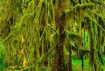 Nature / Greenery