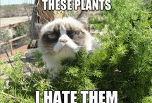 grumpy cat (;