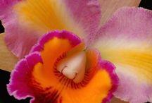 Bloemen close ups