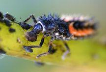 Škůdci a parazity