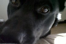 Mis mascotas | Cutest Pets / Mis mascotas, Whisky y Kiwi