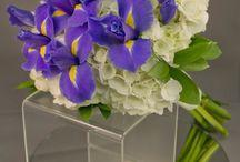 Iris & Gladiolus & Clematis