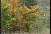 Ovis zenék-ősz