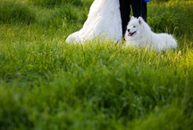 Furry wedding friends / Photography of furry friends in weddings that will make you go 'awwww'.