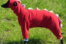 Dog jetsey