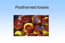 Postharvest information perishables