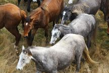 endangered animals in new zealnd