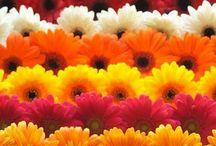 flowers for fireside
