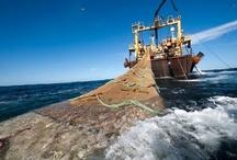 Medio Ambiente Marino / Imagenes relacionadas con el entorno marino, especialmente del Mediterraneo. Espero que os guste !