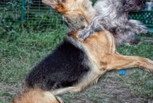 My dogs :P