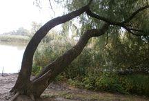 Fák / Érdekes,öreg fák.