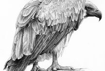 Stunning Vultures