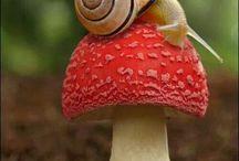 Beautiful Animals & Nature