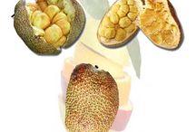 Fruit information