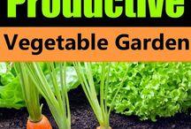 vegetable / fruit gardens