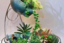 Succulent Arrangement / Want to breathe life into your home? Succulents are perfect for any home. They need very little care to thrive and show off their beauty.