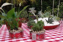 Plantas y Flores / by Susan Interiano