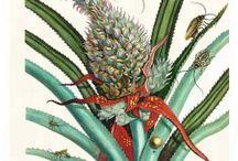 Metamorphosis insectorum Surinamensium from Maria Sibylla Meriaen