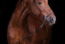 Equestrian