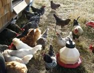 Farms & Nurseries