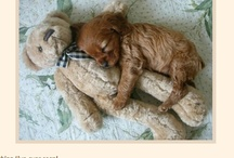 adorable pets / by Mary Anne Thomas Drinkwine