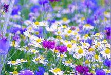Blomsterenga
