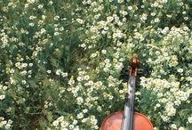 cello images