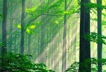 Hobbiton - Lorian Elfen Forest