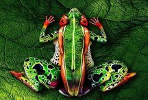 Beautifull paints / beautifull bodypaints