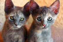 Cute Kittens <3