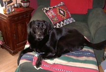 ♥ Buckshot the Black Lab...RIP ♥ / Our beloved black lab Buckshot...he made our lives full for 13 years. He will be forever missed. / by Robyn Holstein