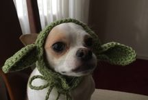 """Trip's Crocheted Creations (Chance for Moore) / Trip Watson has been crocheting hats for everyone's pets. These are some of the patterns and inspirations he has found on the internet.  (Based on character from """"A Chance for Moore"""", book 1 of the Moore Romance Series"""