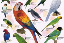 Bird Charts & Much More
