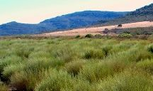 7 Clans on Rooibos-Route / Experience Rooibos in 7 different ways